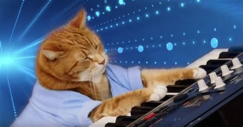 'Keyboard Cat' is Dead, Remember Him With This Crazy