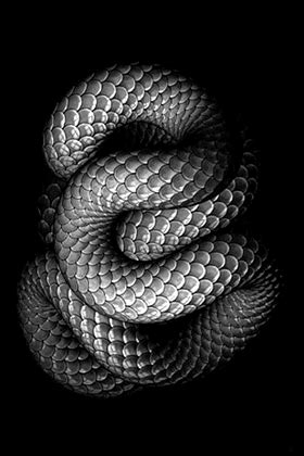 Free Animated Snake Gifs at Best Animations