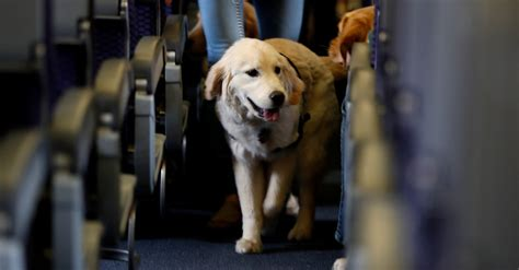 Is That Dog (or Pig) on Your Flight Really a Service