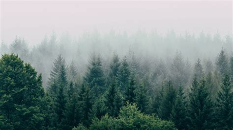 Wallpaper forest, fog, aerial view, trees, sky hd, picture