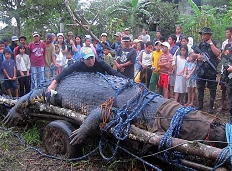 World's Largest Crocodile 'Lolong' Dies in Philippines